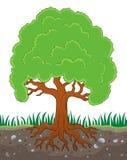 Árbol con la imagen 3 del tema de las raíces libre illustration