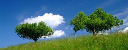 Árbol con la nube imágenes de archivo libres de regalías