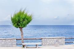 Árbol con la opinión del mar Fotografía de archivo libre de regalías