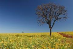 Árbol con la plantación y las flores Fotos de archivo