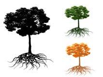 Árbol con la raíz Imagen de archivo