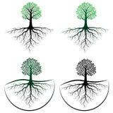 Árbol con la raíz Fotografía de archivo