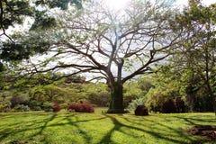 Árbol con la sombra Fotografía de archivo libre de regalías