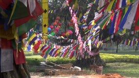 Árbol con las banderas budistas coloridas en Lumbini, Nepal almacen de metraje de vídeo