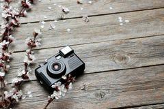 Árbol con las flores Fotografía de archivo