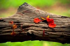 Árbol con las flores Imágenes de archivo libres de regalías