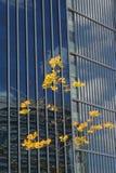 Árbol con las hojas amarillas delante de un edificio grande Fotografía de archivo libre de regalías
