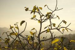 Árbol con las hojas anaranjadas Imagen de archivo libre de regalías