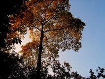 Árbol con las hojas coloridas Foto de archivo libre de regalías