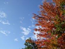 Árbol con las hojas de la naranja y el cielo azul con las nubes blancas Imagen de archivo
