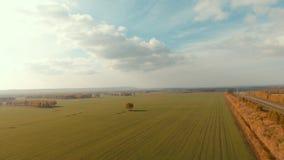 Árbol con las hojas de otoño amarillas, campos verdes alrededor Naturaleza sin tocar almacen de video