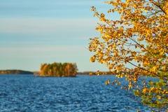 Árbol con las hojas de otoño de oro contra un fondo borroso con la isla en el lago fotografía de archivo libre de regalías