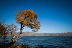 Árbol con las hojas del amarillo cerca del lago foto de archivo