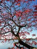 Árbol con las hojas del rojo cerca del lago fotografía de archivo