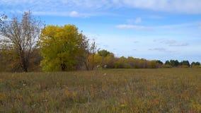 Árbol con las hojas que amarillean en prado del otoño almacen de metraje de vídeo