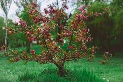 Árbol con las hojas rojas Foto de archivo libre de regalías