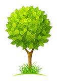 Árbol con las hojas verdes