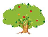 Árbol con las manzanas Fotografía de archivo libre de regalías
