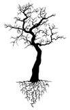 Árbol con las raíces Foto de archivo libre de regalías