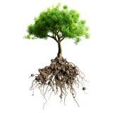 Árbol con las raíces ilustración del vector