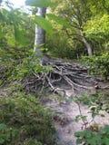 Árbol con las raíces Fotos de archivo