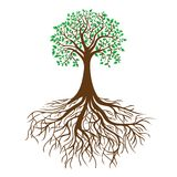 Árbol con las raíces y el follaje denso, vector stock de ilustración