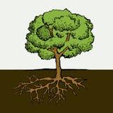 Árbol con las raíces y las hojas Imagen del vector Imagen de archivo libre de regalías