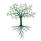 Árbol con las raíces y las hojas del verde ilustración del vector