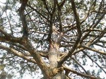 Árbol con las ramas Fotografía de archivo libre de regalías