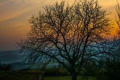 Árbol con las ramas Fotografía de archivo