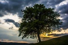 Árbol con las ramas Fotos de archivo libres de regalías