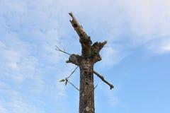 Árbol con las ramas cortadas con el cielo nublado Imagen de archivo libre de regalías