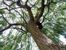 Árbol con las ramificaciones y las hojas Fotos de archivo