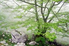 Árbol con las rocas Imágenes de archivo libres de regalías
