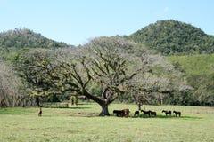 Árbol con los caballos Imagen de archivo libre de regalías