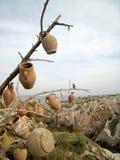 Árbol con los crisoles Foto de archivo