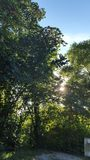 Árbol con luz del sol Imagenes de archivo