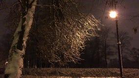 Árbol con ramas dobladas y posts de la lámpara metrajes