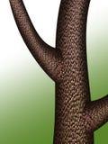 Árbol con textura de la corteza Fotografía de archivo libre de regalías