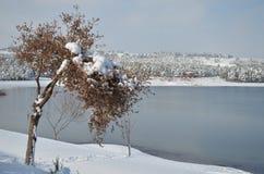 Árbol con un casquillo de la nieve en invierno Foto de archivo libre de regalías