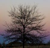 Árbol con un fondo muy colorido de la puesta del sol foto de archivo libre de regalías