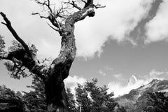 Árbol con una buena visión Imagen de archivo