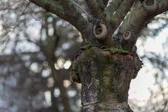 Árbol con una cara divertida Concepto temprano del tiempo de la primavera Foto de archivo libre de regalías