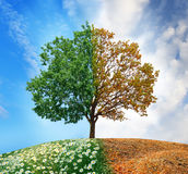 Árbol conceptual fotografía de archivo libre de regalías