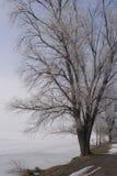 Árbol congelado Imagen de archivo