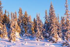 Árbol congelado Imágenes de archivo libres de regalías