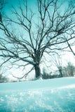 Árbol congelado Foto de archivo