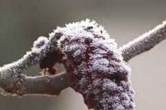 Árbol congelado Imagen de archivo libre de regalías