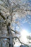 Árbol congelado Foto de archivo libre de regalías