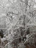 Árbol congelado Fotos de archivo